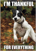 Thankful Pup - greeting-cards Maker