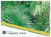 Palm Leaves - ultra-postcards Maker
